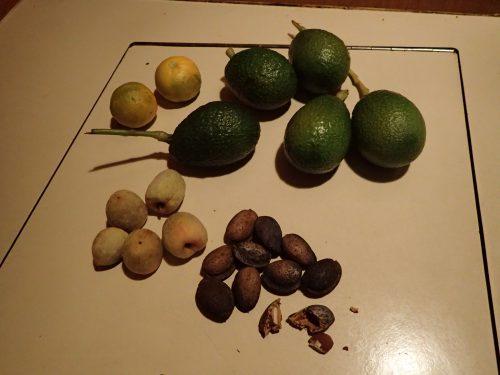 Samlat byte efter vandring: clementiner, avocado, aprikoser och mandlar. Plockat bara så där - ute i det fria! 😀