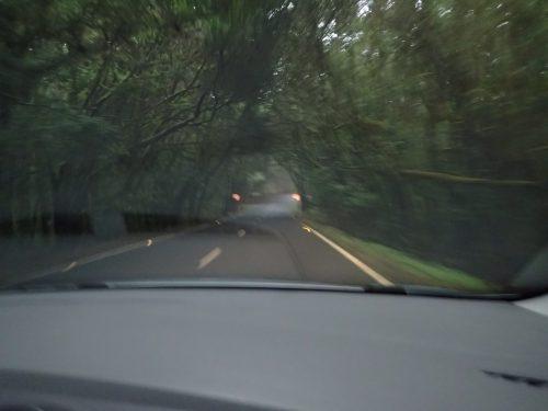 Vegetationen var tät ibland över vägarna.