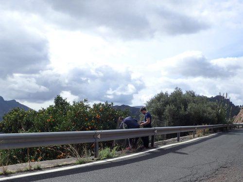 Ett apelsinträd dök upp bredvid vägen, och Tobbe och Anders plockade och plockade. Apelsinerna smakade som citron-apelsiner, de var nog kanske inte riktigt mogna. Men väldigt goda.